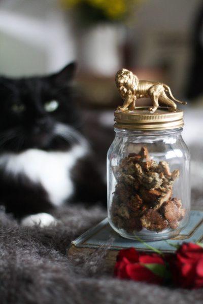 Homemade cat treats with tuna & catnip (+ DIY jar for cat treats)