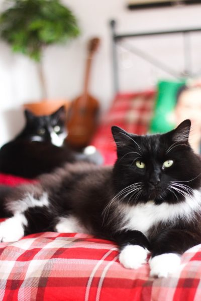 Pet Photography: 7 tricks to take beautiful pictures of your cat