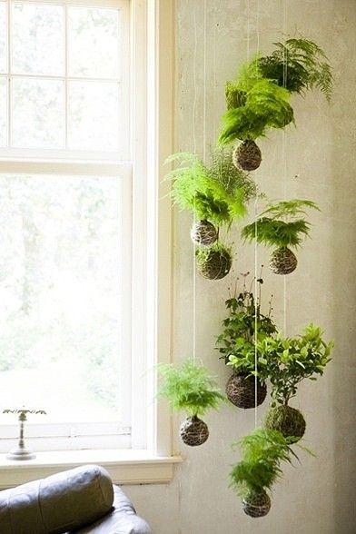 String moss ball garden