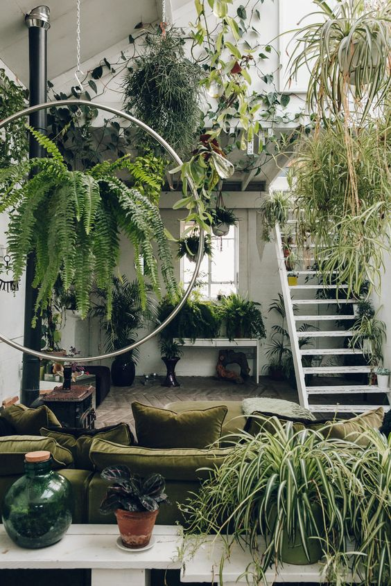 Attic garden