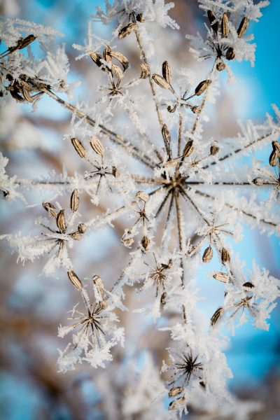 Common winter holiday myths busted!