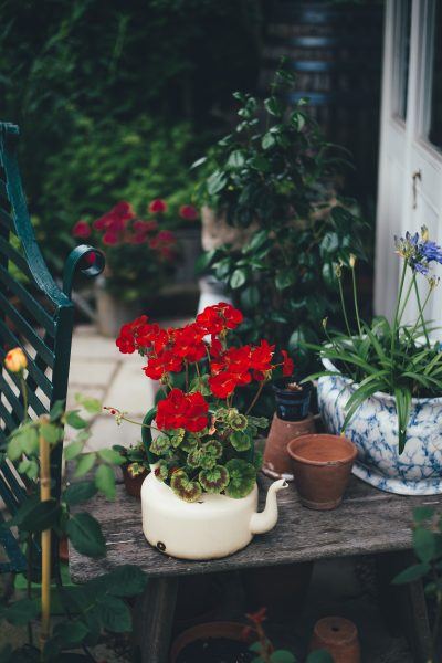 A brief guide to garden mindfulness