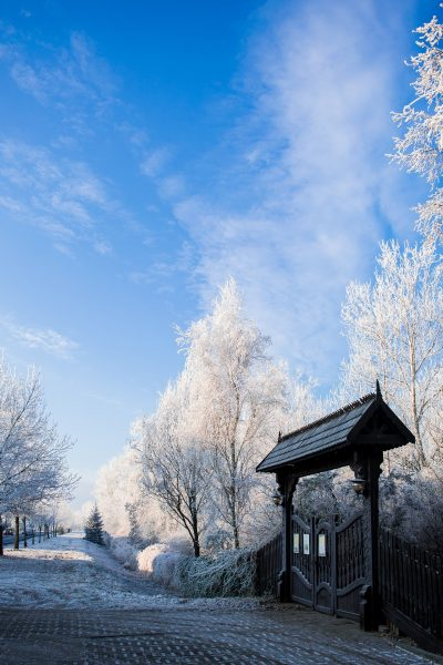 Making your garden a winter wonderland this Christmas