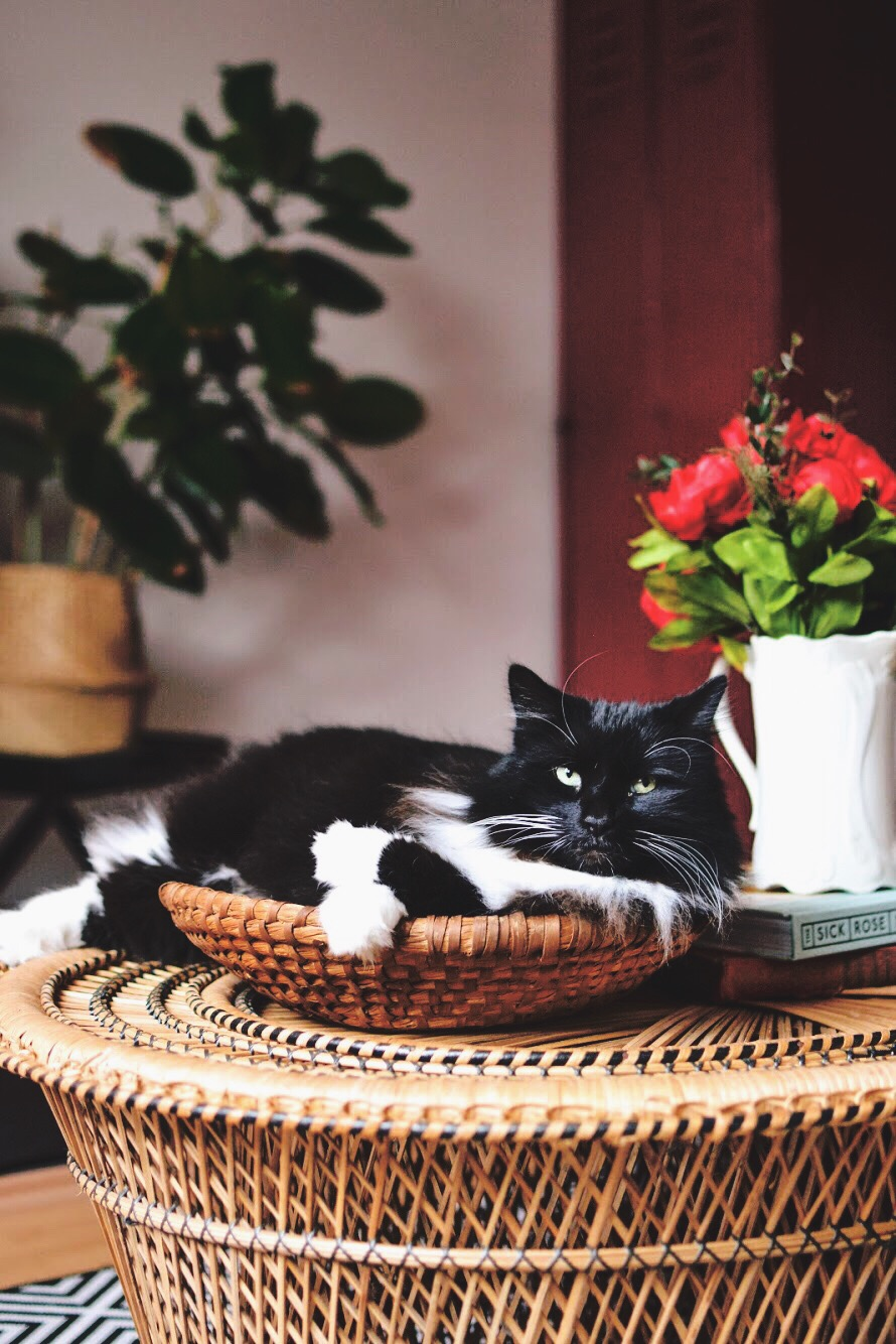 5 tips to make your pet #instafamous
