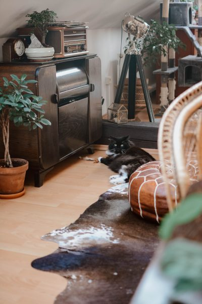 Tips to keep your floor clean in the home